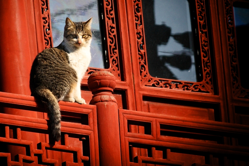Taken in Shanghai. Bow before your feline master.