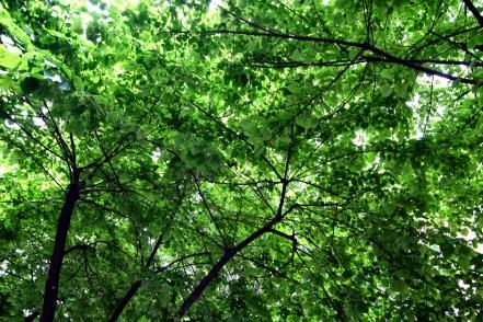 Greenery above La Rumbla, Barcelona