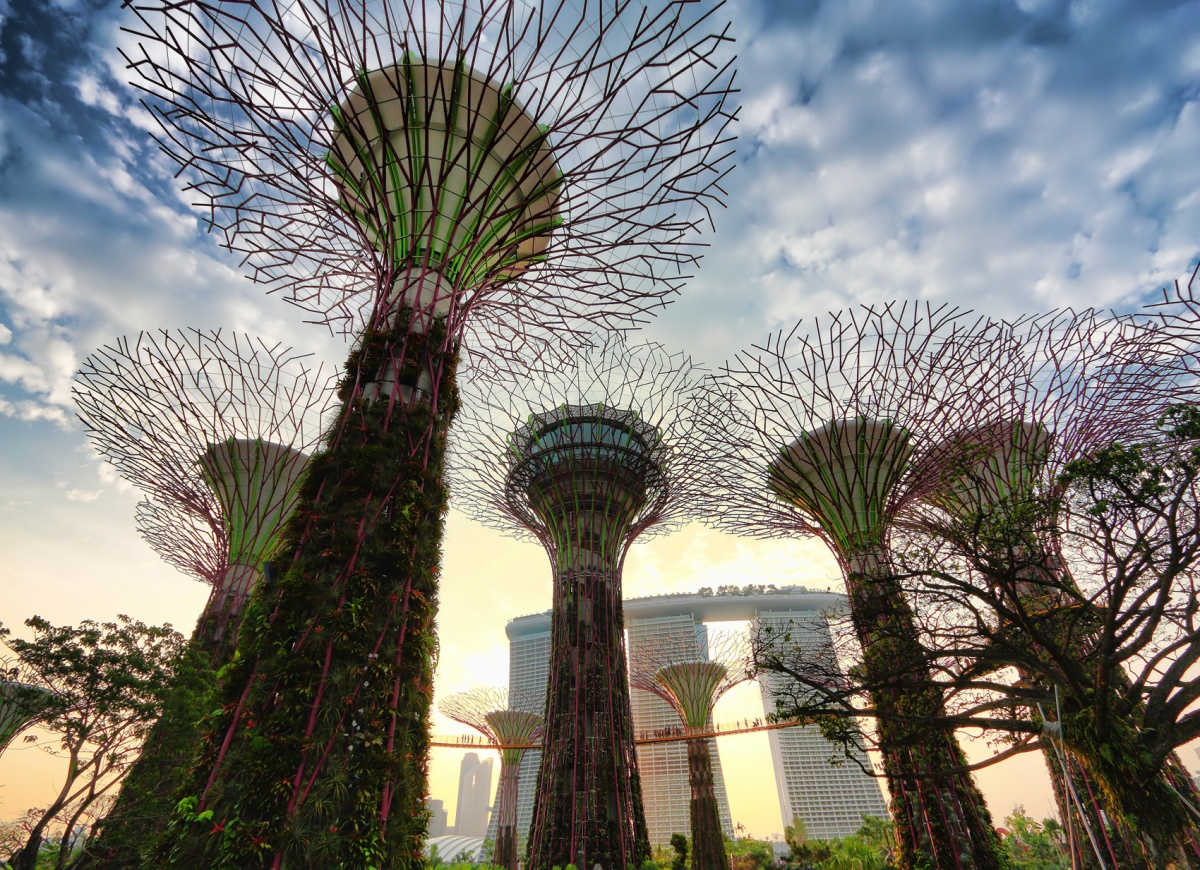 Introducing The Supertrees A Certain Slant Of Light