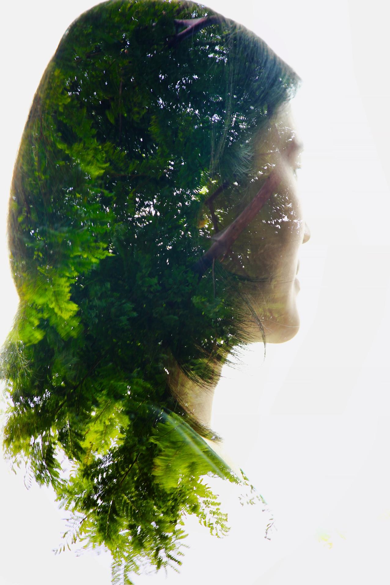 Green Leaves IV