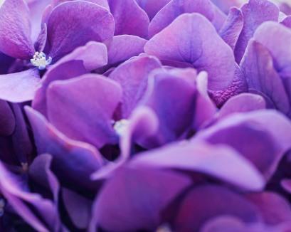 Purple zest
