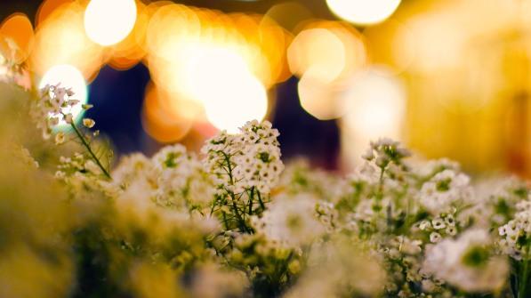 Flowers against light.