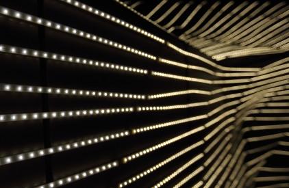 Still looking at strings of lights. Did I mention catnip?
